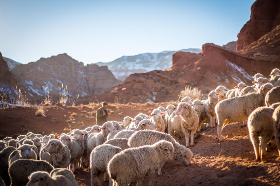 IV  Niedziela Wielkanocna – Dobrego Pasterza – 25.04.2021r.